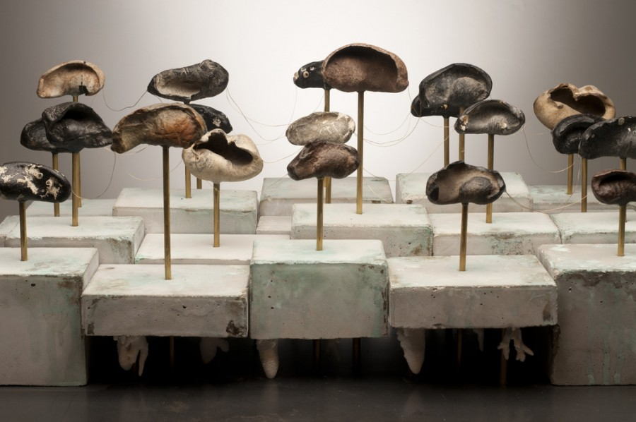 Photo of an abstract art installation that looks similarly to fossils or mushrooms
